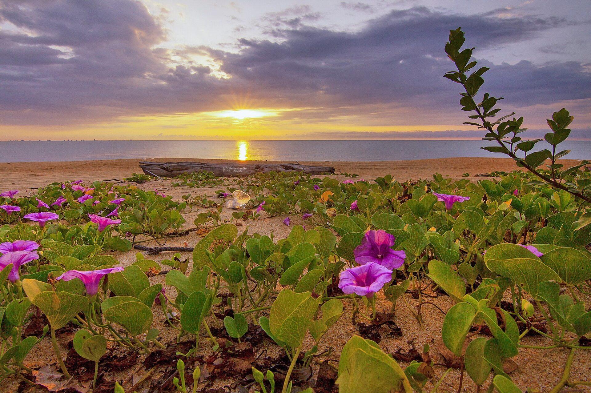 vot morning glory beach